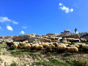 201603 masafer yatta photoblog6